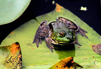 Frogs Photograph - Frog On A Lily Pad by Nick Gustafson