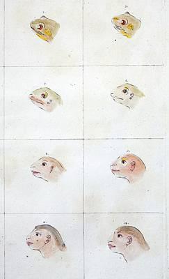 Frog To Human Evolution Art Print