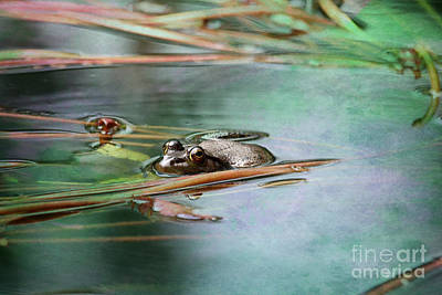 Photograph - Frog by Trina  Ansel