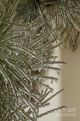 Photograph - Frozen Pine Needles by Gene Berkenbile