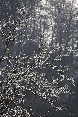 Photograph - Frozen by Raffaella Lunelli