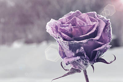 Photograph - Frozen Rose by Martin Capek