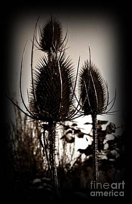Photograph - Fuller's Teasel Sepia by Chalet Roome-Rigdon