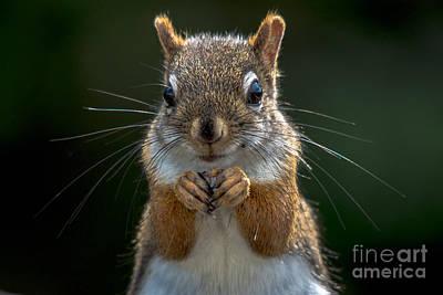 Photograph - Furry Friend by Cheryl Baxter