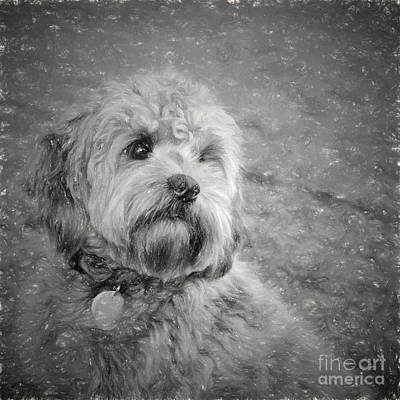Photograph - Ganarascan Dog by Les Palenik