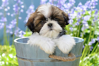 Painting - Garden Bucket Puppy by Greg Cuddiford