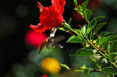 Ventura Photograph - Garden Delight by Lynn Bauer