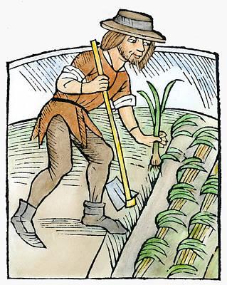 Spring Bulbs Painting - Gardener Planting Leeks by Granger