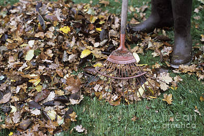 Gardener Raking Leaves Art Print by Maxine Adcock