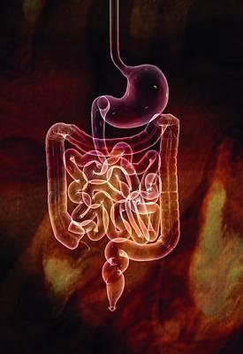Gut Photograph - Gastrointestinal System by Harvinder Singh