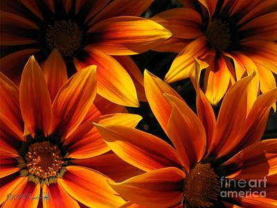 Art Print featuring the photograph Gazania Named Kiss Orange Flame by J McCombie