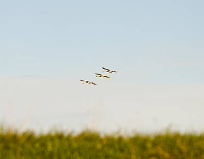 Photograph - Geese In Flight by Jim Orr