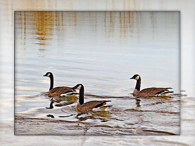 Photograph - Geese by Walter Herrit