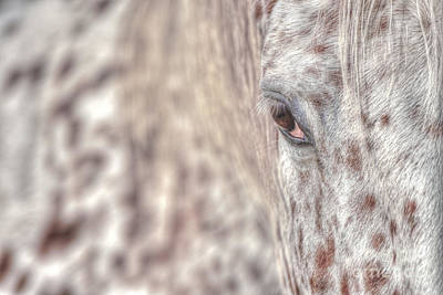 Photograph - Gentle Giant by Joshua McCullough