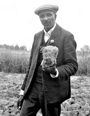 George Washington Carver Photograph - George W. Carver, American Botanist by Science Source