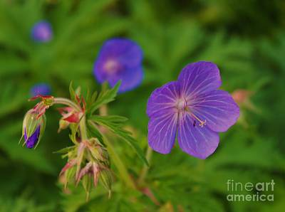 Photograph - Geranium by Katy Mei