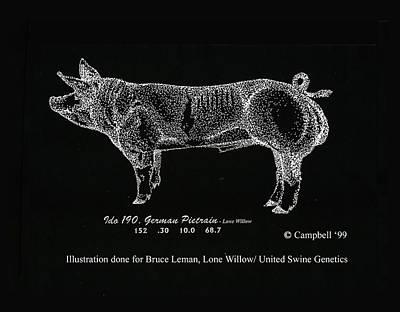 German Pietrain Boar Art Print by Larry Campbell