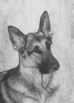 Photograph - German Shepherd by Angie Vogel