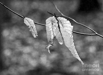 Photograph - Ghost Leaves by Steven Ralser