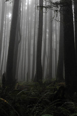 Photograph - Ghostly Forest by Rebecca Parker