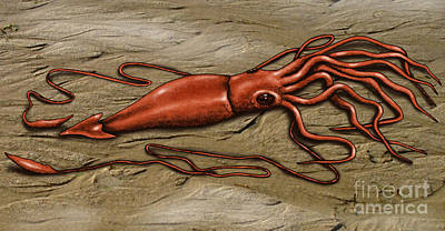 Photograph - Giant Squid by Gwen Shockey