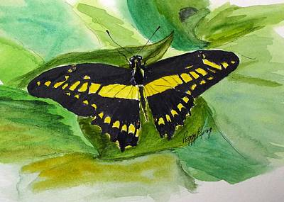 Painting - Giant Swallowtail by Peggy King