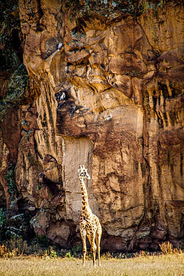 Photograph - Giraffe Against The Rocks Color by Mike Gaudaur