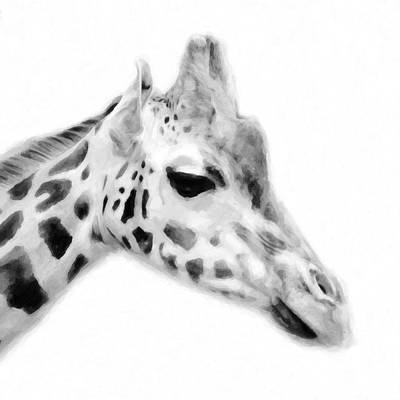Animal Themes Mixed Media - Giraffe On White Background by Tommytechno Sweden