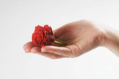 Leaves Photograph - Giving A Rose by Michal Bednarek