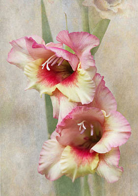 Gladiola Art Print by Angie Vogel