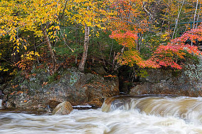 Photograph - Glen Ellis River by Sharon Seaward