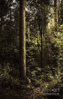Glengarry Tasmania Bush Forest In Australia Art Print by Jorgo Photography - Wall Art Gallery