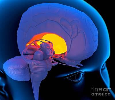 Processor Photograph - Globus Pallidus In The Brain, Artwork by Roger Harris