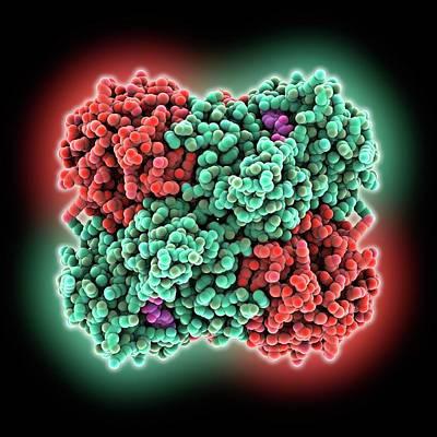 Glucose Dehydrogenase Enzyme Art Print