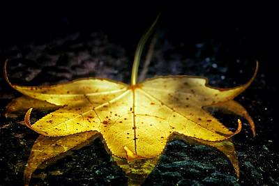 Photograph - Golden Leaf by Beth Akerman