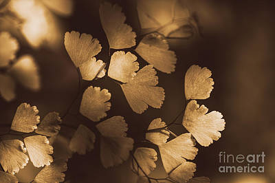 Brown Leaf Photograph - Golden Leaves Hanging From A Plant In Autumn by Jorgo Photography - Wall Art Gallery