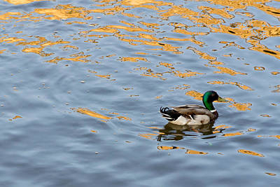 Art Print featuring the photograph Golden Ripples by Keith Armstrong