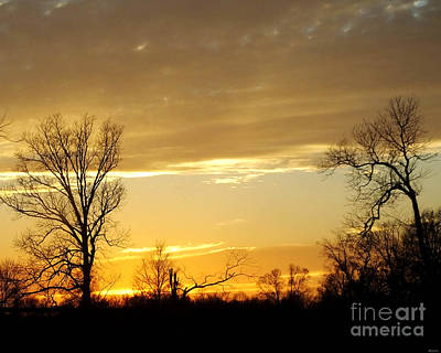 Photograph - Golden Sunset 61 by Lizi Beard-Ward
