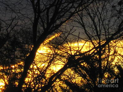 Photograph - Golden Twilight by Tara  Shalton