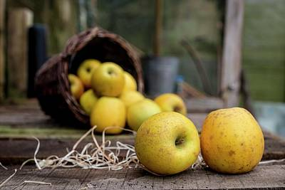 Goldrush Apples Falling From A Basket Art Print by Aberration Films Ltd