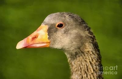Geese Painting - Goose by George Atsametakis