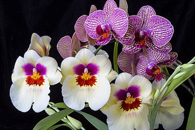 Pretty Orchid Photograph - Gorgeous Orchids by Garry Gay