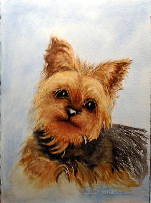 Yorkshire Terrier Watercolor Painting - Gracie by Sandra Stone