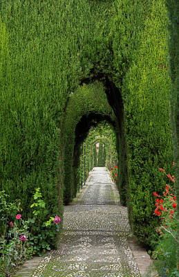 Alhambra Photograph - Granada, Spain, Alhambra, Famous Hedges by Bill Bachmann