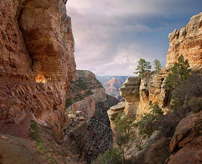 Photograph - Grand Canyon National Park, Bright by Ed Freeman