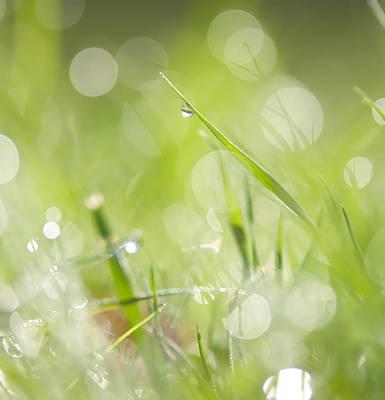 Photograph - Grass by Alex Grichenko