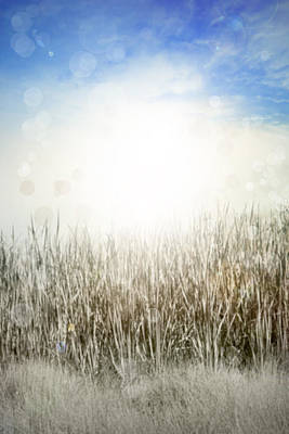 Vertical Abstract Photograph - Grass And Sky  by Les Cunliffe