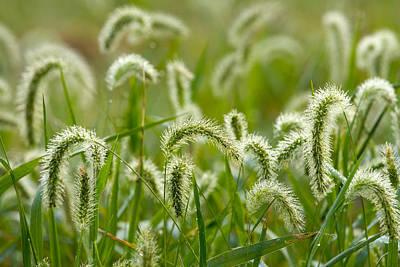 Photograph - Grass by Byron Jorjorian