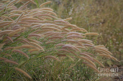 Grass Together In A Group Art Print