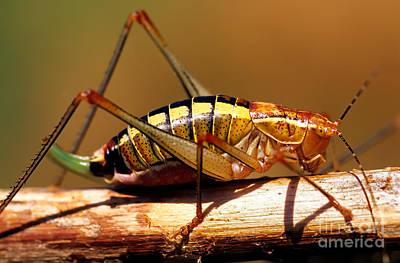 Grasshopper Photograph - Grasshopper by George Atsametakis